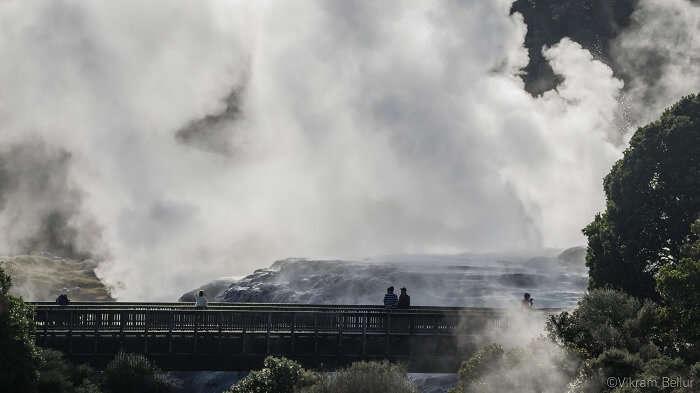 natural geyser in Rotorua