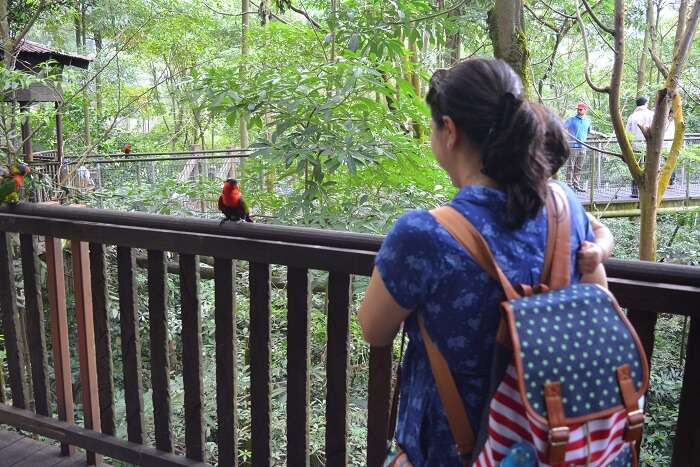 Jurong Bird Park in Malaysia