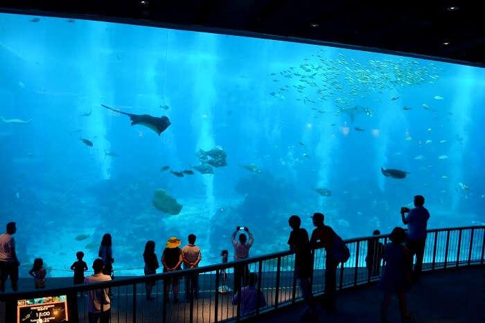SEA aquarium in sentosa island