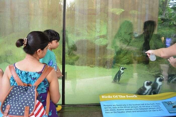 singapore zoo tour with family