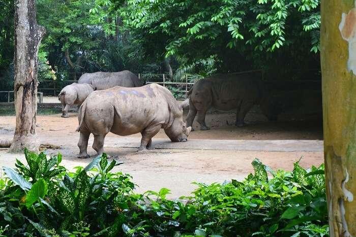 wildlife at the singapore zoo
