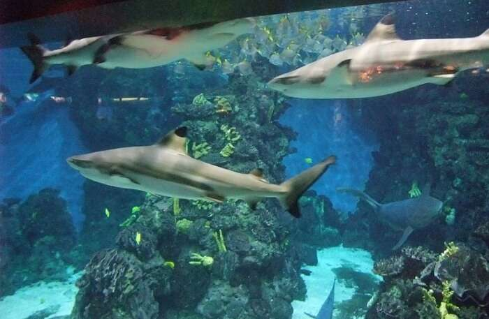 sharks in the Aquarium Barcelona