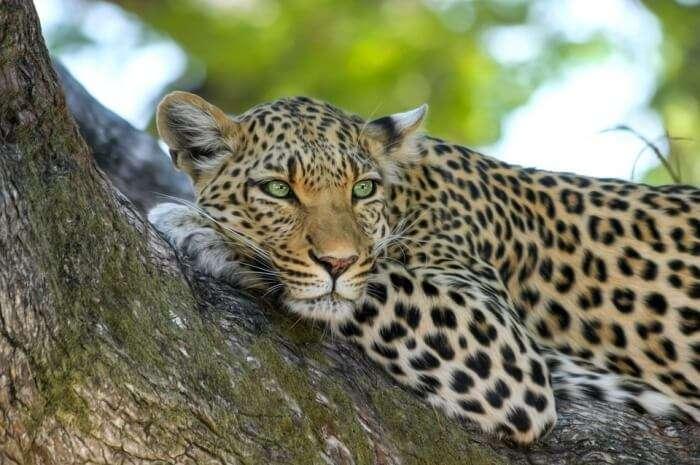 Dubri National Park And Wildlife Sanctuary