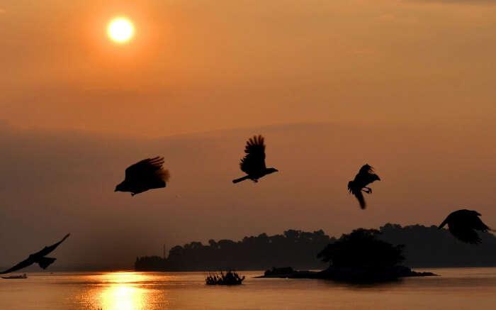 Silhouette of birds in Guwahati