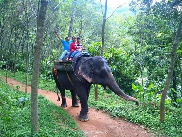 Eravikulam National Park elephant ride