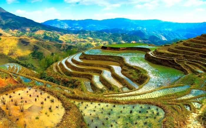 Ifugao Rice Terraces in Phillipines