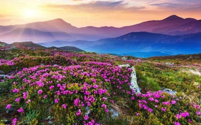 Valley of flowers in Uttarakhand