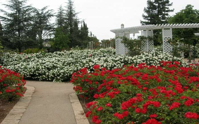 Wohl Rose Park in Israel