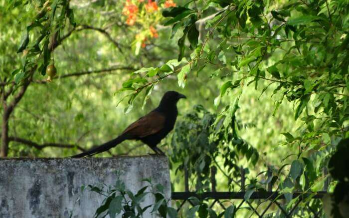 a black bird sitting on a wall in national park