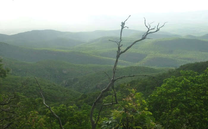 a view of lush green hills Nagari hills