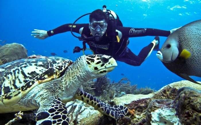deep sea diving with turtles in Langkawi