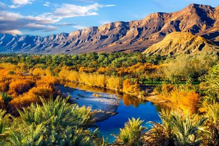 A beautiful shot of the lush oasis landscape in the Draa valley during spring