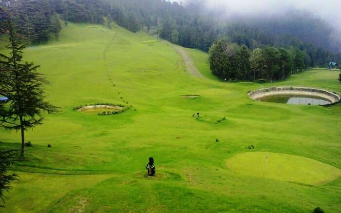 green meadow of Naldehra in Himachal