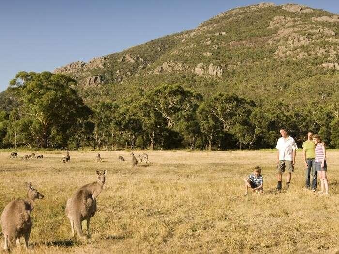 Tourists ready to feed the Kangaroos at the Grampians Wildlife Park in Australia