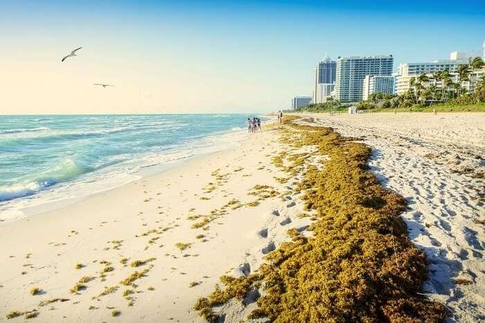 famous beaches in miami
