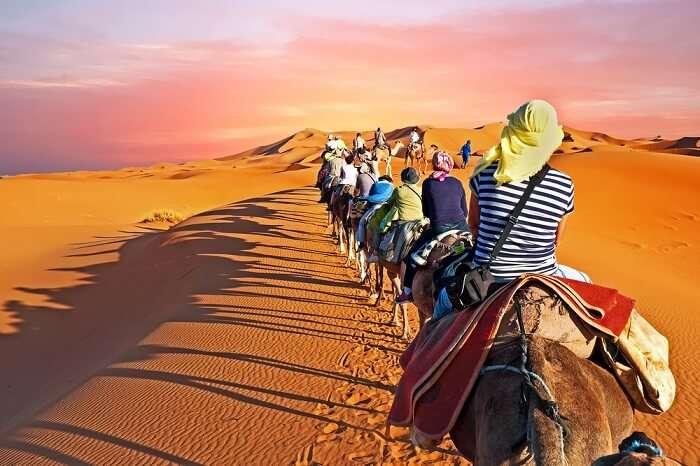 Camel caravan going through the Sahara desert in Morocco at sunset