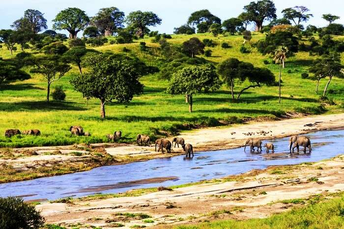 Serengeti National Park in Tanzania, Africa