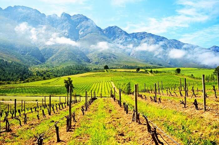 Cape Winelands in Africa