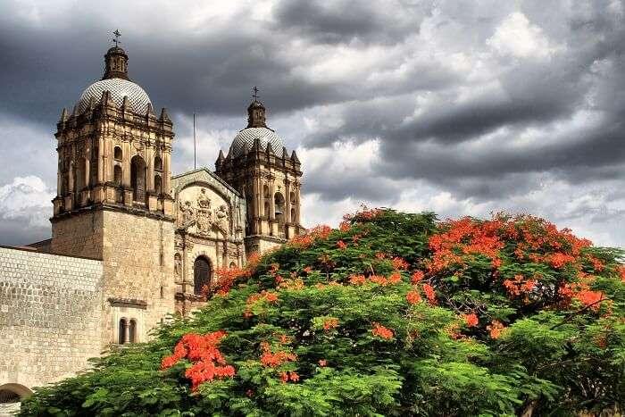 Florecer en Oaxaca