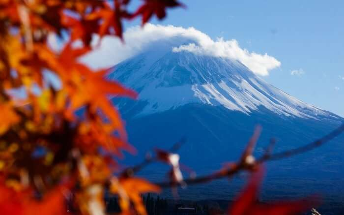 Mount Fuji in the backdrop of a maple tree in autumn in Japan