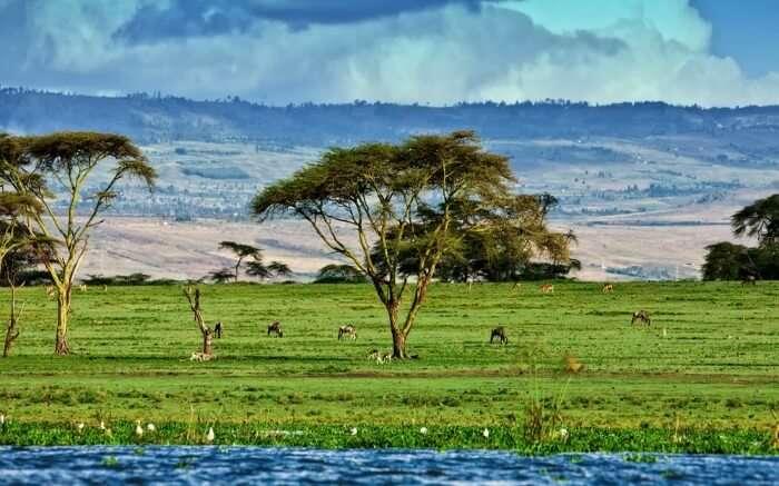 The shore of Lake Naivasha in Kenya