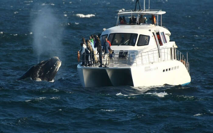 Tourists enjoying whale watching in South Africa