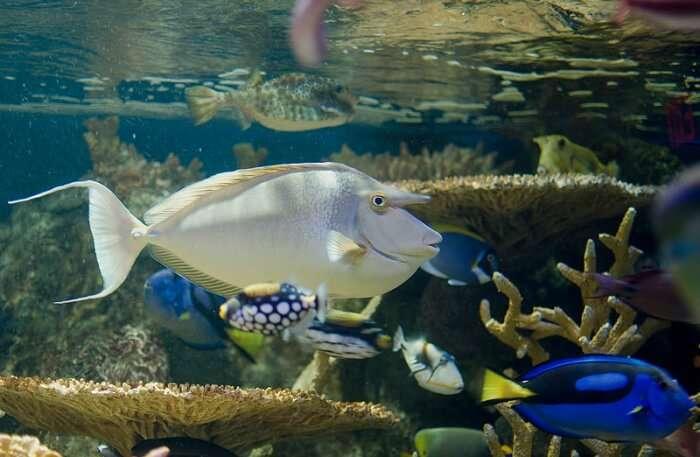 New England Aquarium View