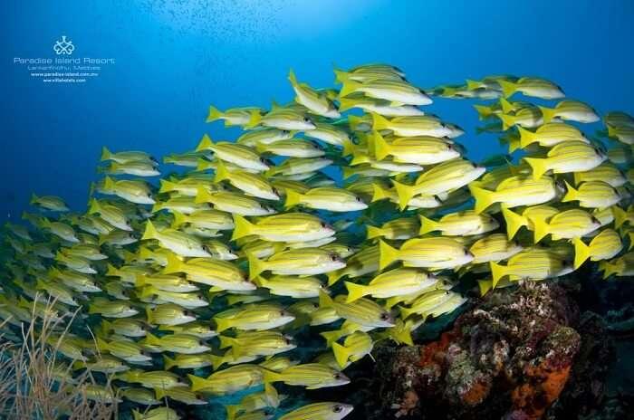 marine life at paradise island maldives