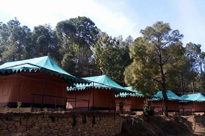 Tents lined up at Bay Berry Camp and Resort in Ranikhet