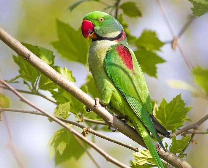 bird watching at chidiya tapu