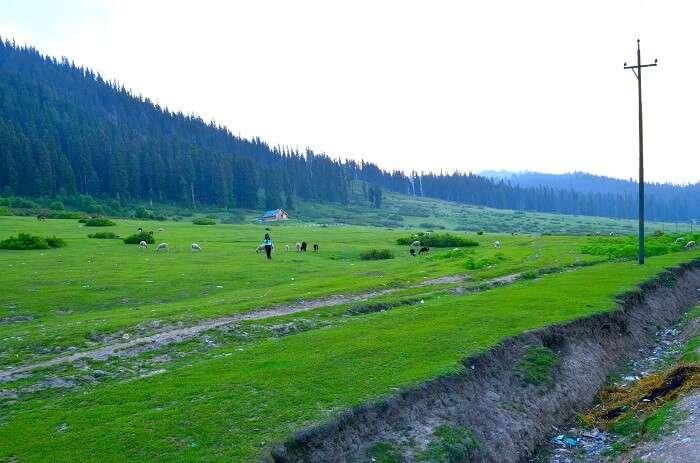 Doodhpathri near srinagar