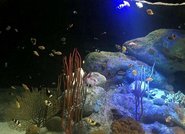 aquarium in underwater world