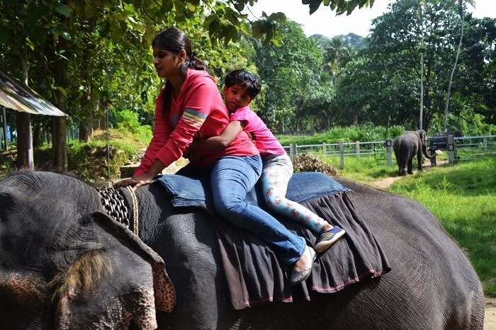 elephant junction in Sri Lanka