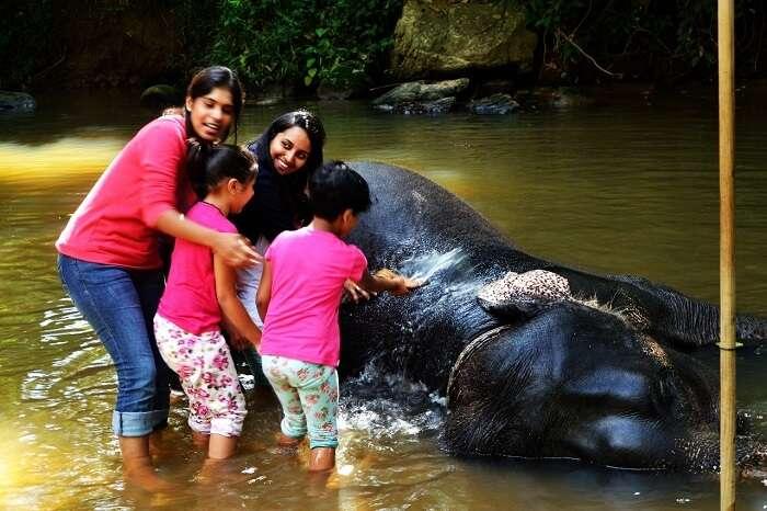 Elephant Junction in Sri Lanka