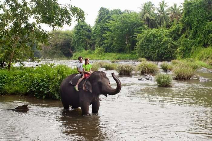 have an amazing honeymoon in Sri Lanka