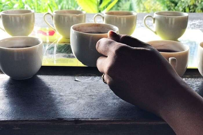 coffee plantations in Bali