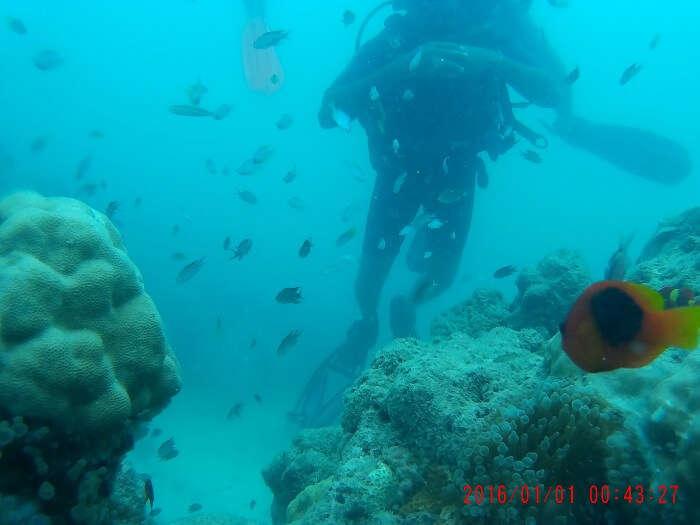 havelock scuba diving