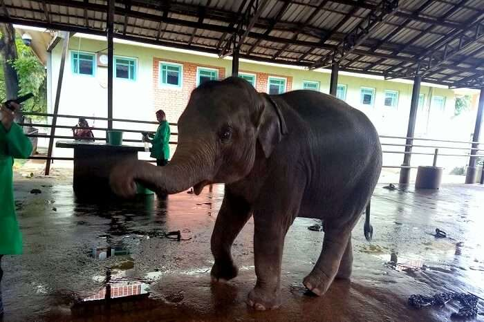 elephants orphanage in sri lanka