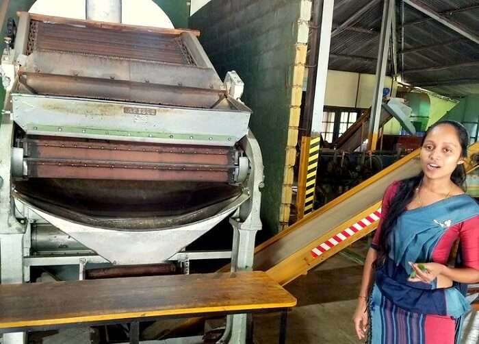 tea factory tour in Sri Lanka