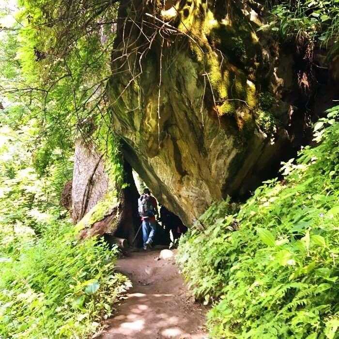 Trekking trail in Kheerganga