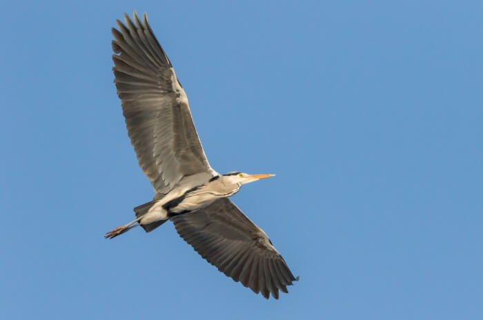 Bird-watching at Rajaji National Park