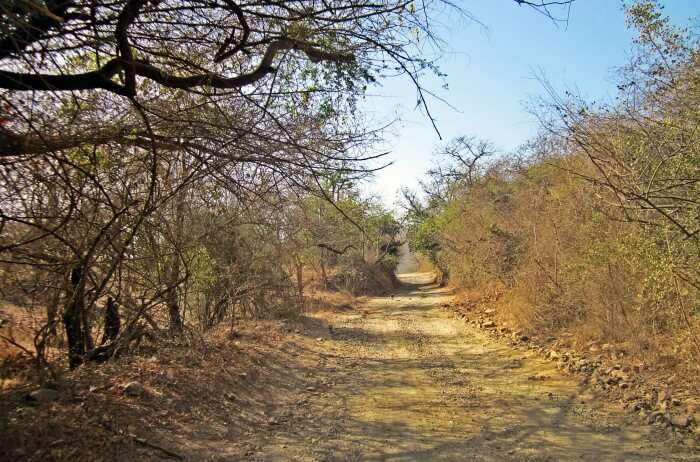 Gir National Park Information