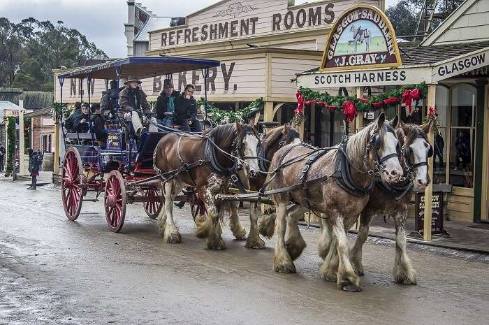 go on a delightful horse carriage ride in melbourne