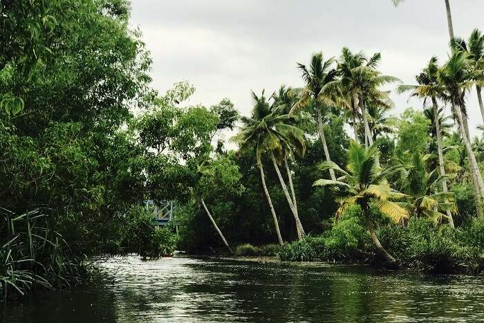 revan kerala boating mangrove tour