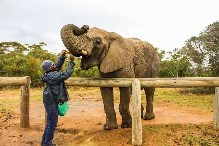 greet elephants at Inkwenkwezi Private Game Reserve