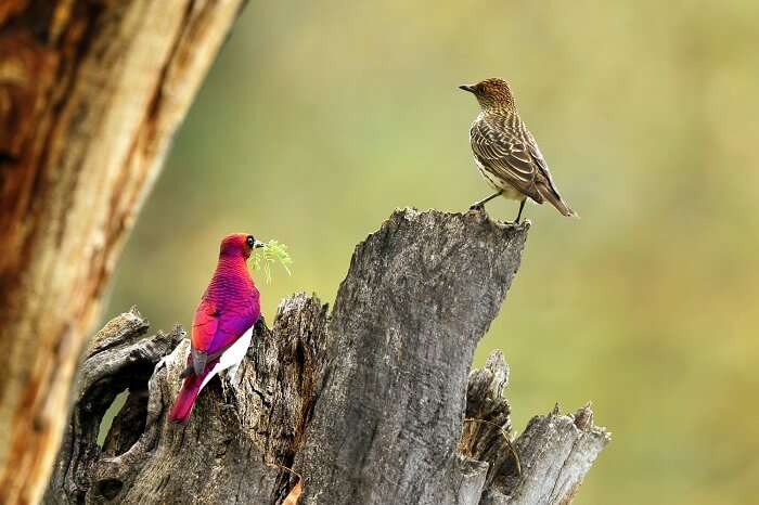watch delightful birds at Mapungubwe National Park