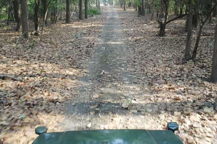 Rajaji National Park Safari