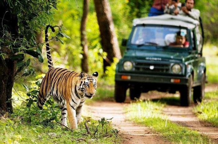 Rajaji Tiger Park