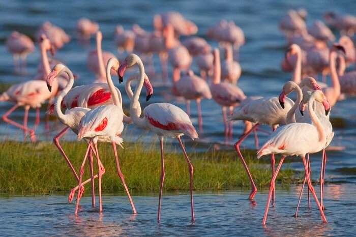 spot flamingoes at West Coast National Park
