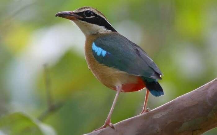acj-2208-kanha-national-park (11)